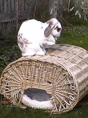 Bunnies November 2003 190