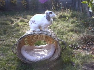 Bunnies November 2003 194