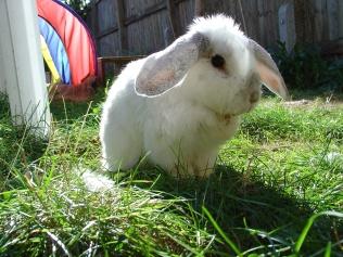 Bunnies October 2003 371