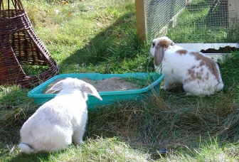 bunnies-october-2003-375-e1523668953548.jpg