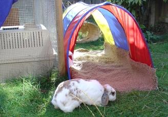 bunnies-october-2003-3761.jpg