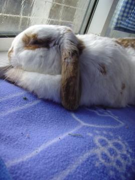 Bunny photos 143