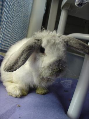 Bunny photos 153