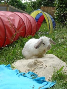 Bunny photos 296