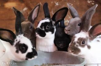 diverse-kaninchen-7827200789