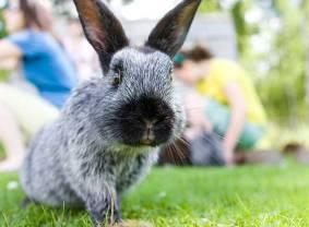 gefahren-fuer-kaninchen-760x560