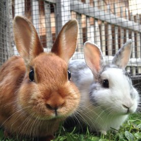 Happy-rabbits-square jpg