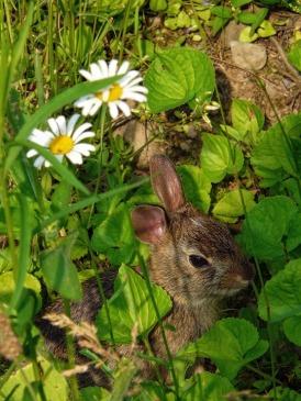 Hare Flowers Animal Rabbit Spring Bunny Nature