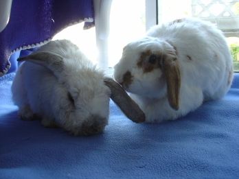 Rabbit photos 083