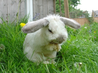 Rabbit photos 128