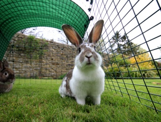 Eglu_go_rabbit_hutch_fox_resistant_run