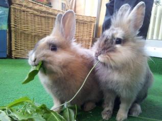 rabbit-652329