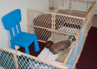 Rabbit-Playpen-out-of-Baby-Gates2