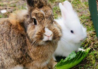 rabbit-treats