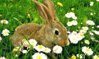 garden-pests-rabbits-garden-pests-rabbits-keep-rabbits-out-of-garden-keep-out-homemade-garden-pest-fighters-rabbits-garden-garden-pests-rabbits-natural-garden-pest-control-rabbits
