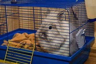 rabbit-in-the-best-indoor-rabbit-cage-beautiful-cheap-indoor-rabbit-hutches-1-720-x-478