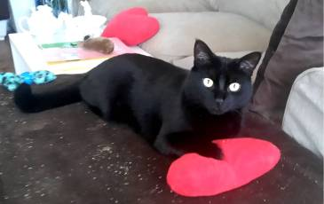 I love you, Meow.jpg