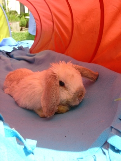 Rabbit photos 154